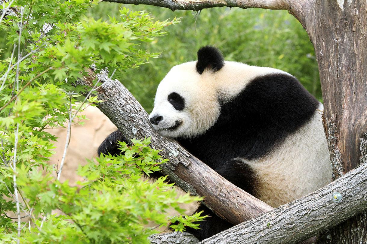Beauval le zoo de tous les records d tours en france for Zoo haute normandie
