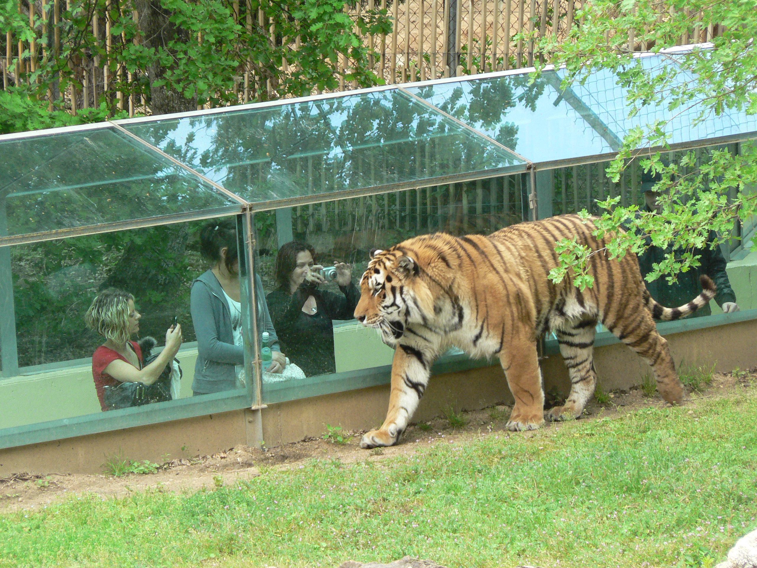 Zoo De France Top 5 Des Plus Beaux Parcs Animaliers Détours En France