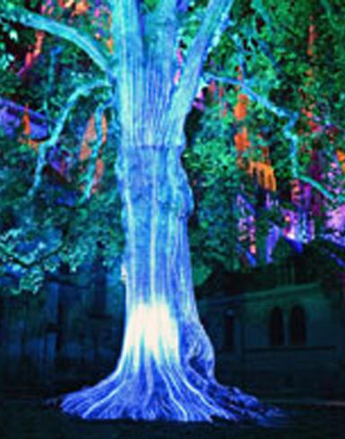 les_lumières_de_la_liberté_Bayeux