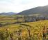 La Véloroute du vignoble d'Alsace à Riquewihr