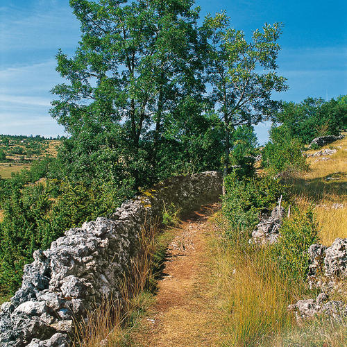 Chemin du Velay