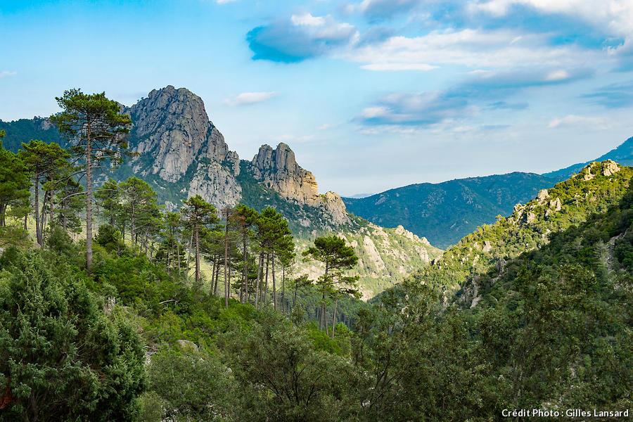 La forêt de Verghellu en Corse