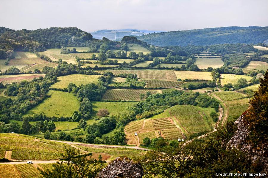 Le vignoble du Mâconnais, en Bourgogne