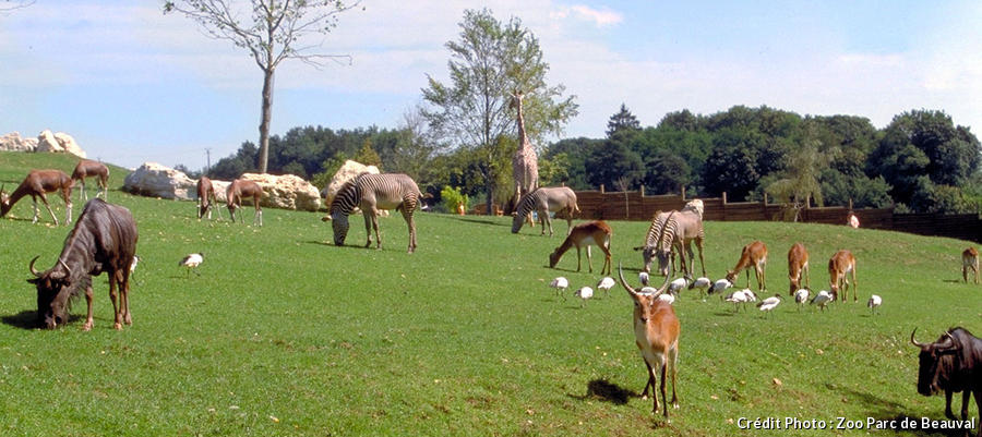 Animaux dela savane africaine