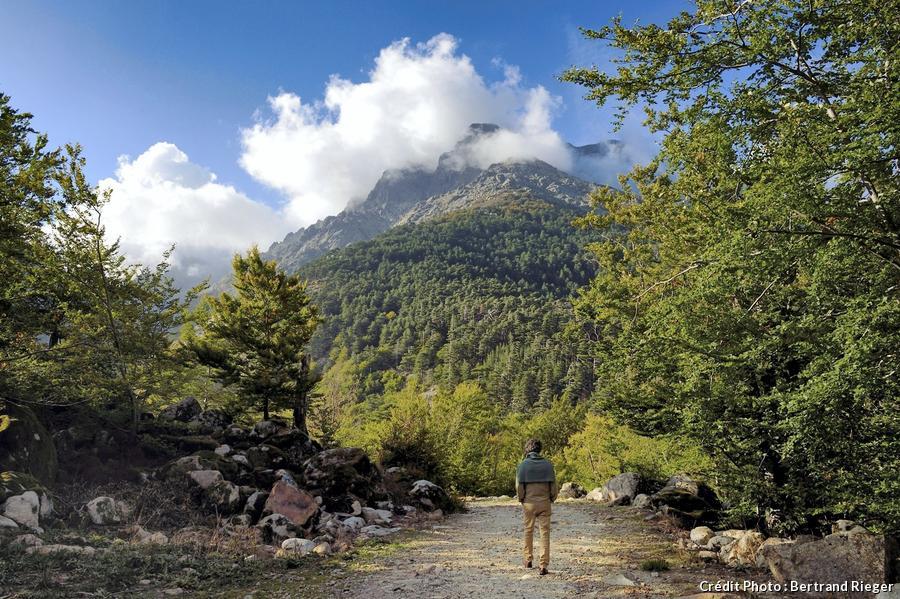 La forêt Corse de Vizzavona