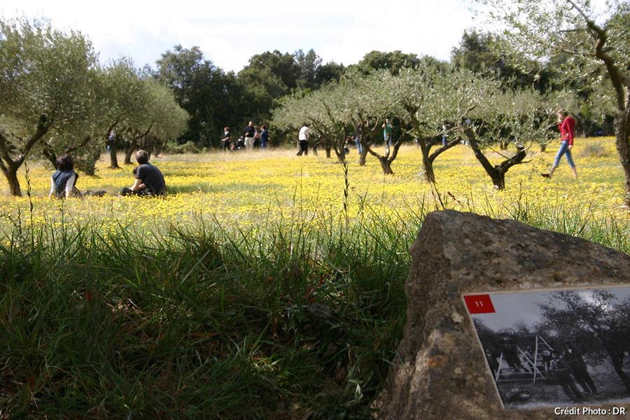 Parcours dans la garrigue au Pont du Gard