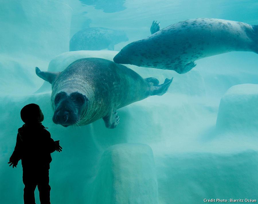 det_aquarium-biarritz_aquarium-biarritz.jpg