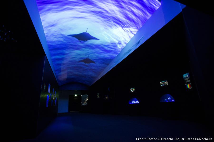 det_aquarium-la-rochelle_cb.jpg