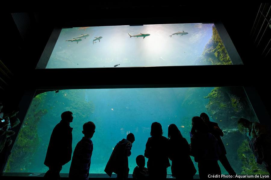 det_aquarium-lyon_aquarium-lyon.jpg