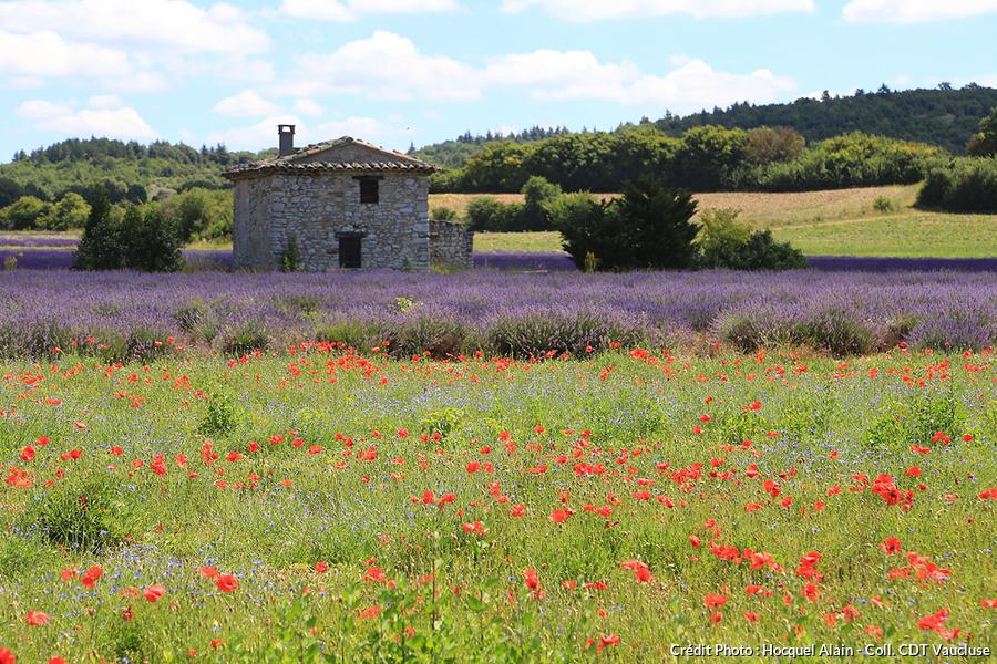 Sault et prairie fleurie