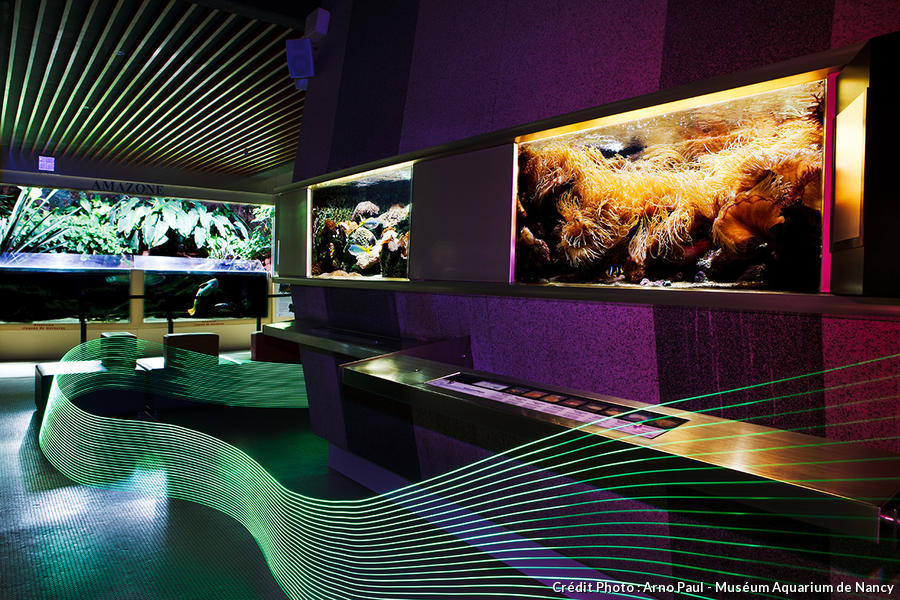det_museum-aquarium-nancy_ap.jpg