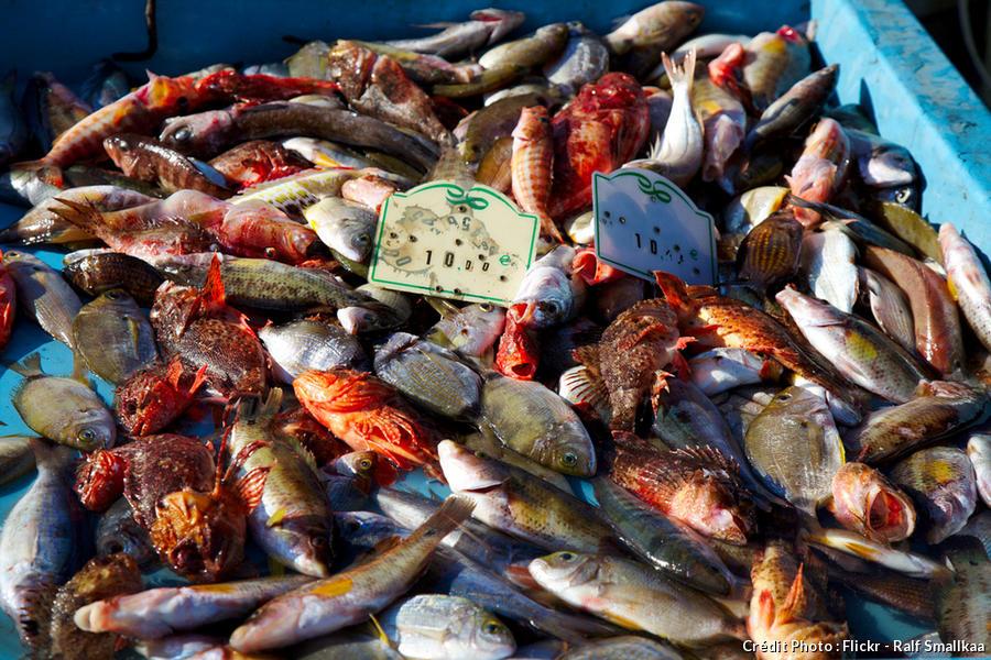 poissons vendus sur le Vieux-Port de Marseille pour la bouillabaisse