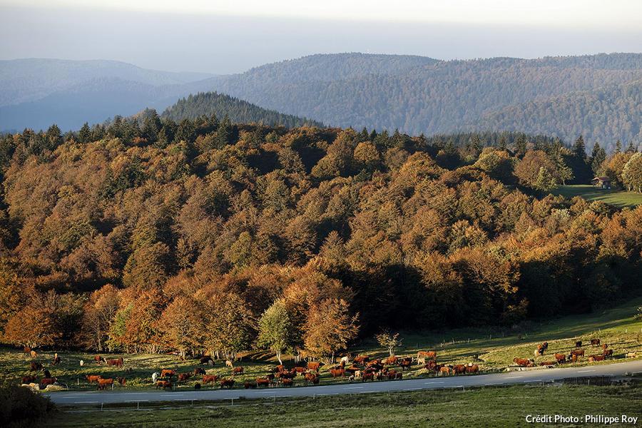 Une houle de monts vue depuis le Ballon d'Alsace