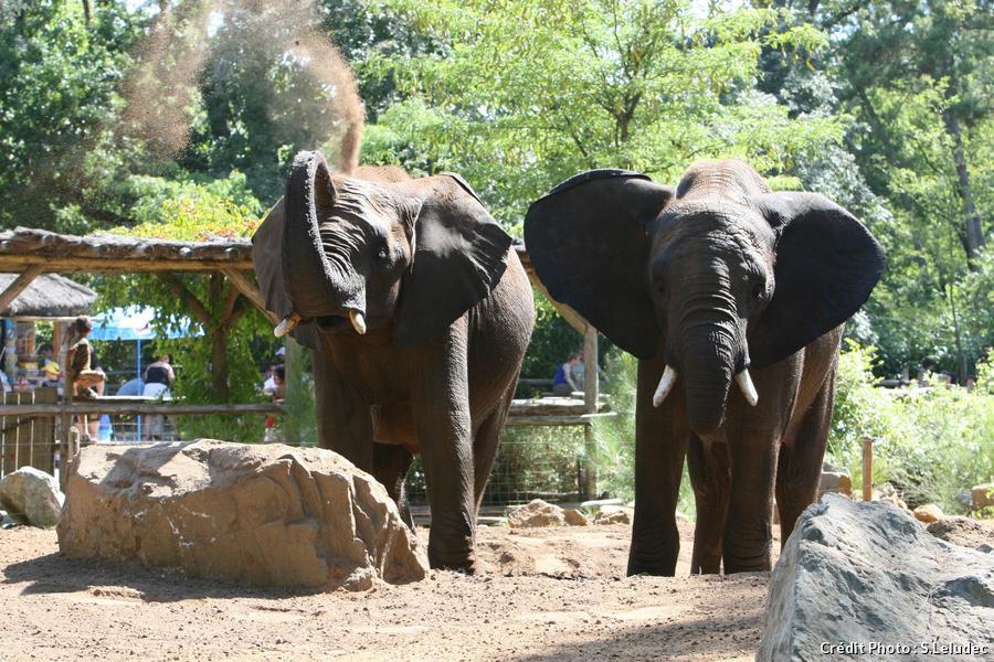Éléphants du zoo de la Flèche