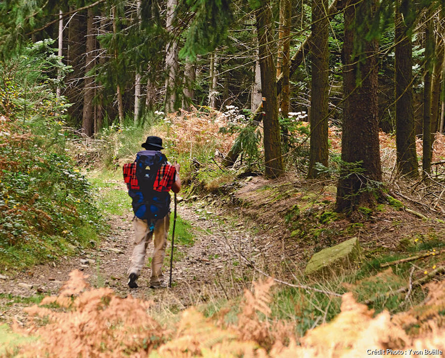 La traversée des bois de la Margeride