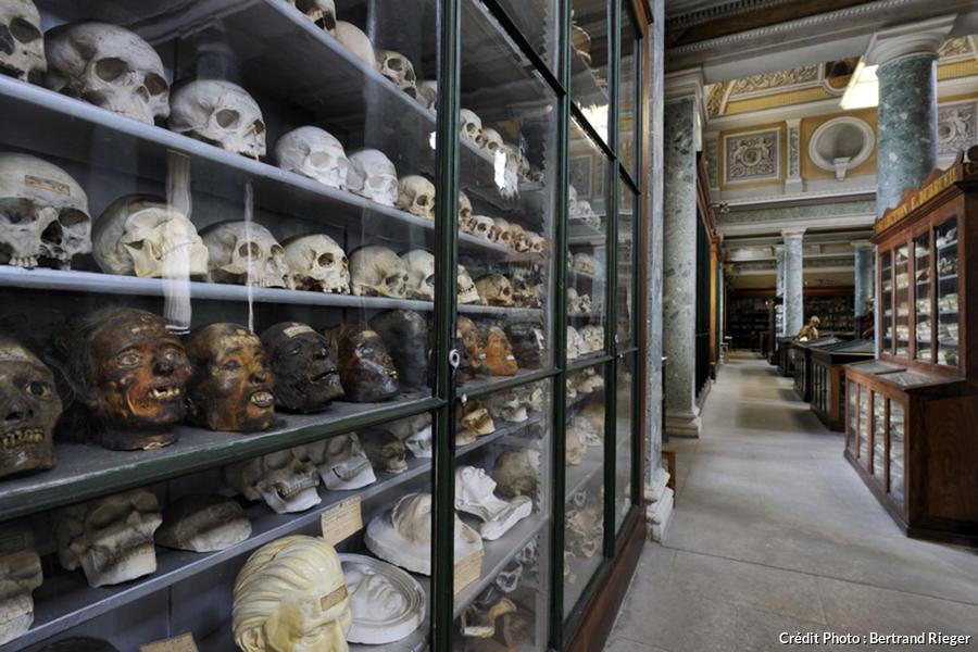 Collection de crânes au conservatoire d'Anatomie de Montpellier