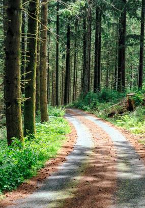 Coronavirus : pourra-t-on se promener en forêt à partir du 11 mai ?