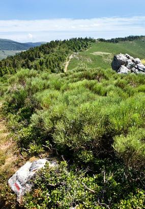 Tanargue, une montagne du tonnerre