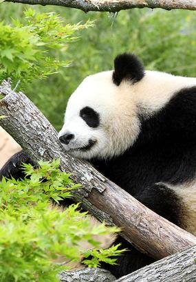 Beauval : le zoo de tous les records