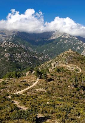 Vizzavona, une forêt Corse à découvrir