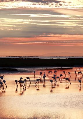 Le parc naturel régional de Camargue : une terre riche en biodiversité