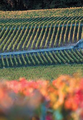 Champagne et Bourgogne au patrimoine mondial de l'Unesco