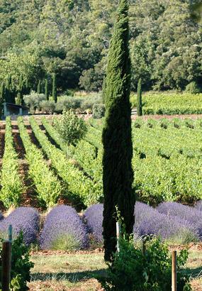 5 vignobles à ne pas rater dans le Var