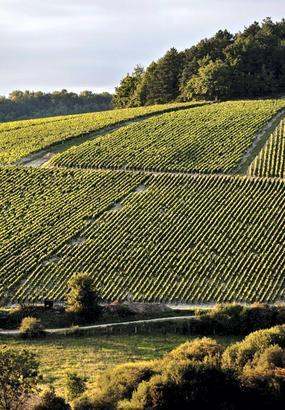 Chablis : porte dor de la Bourgogne