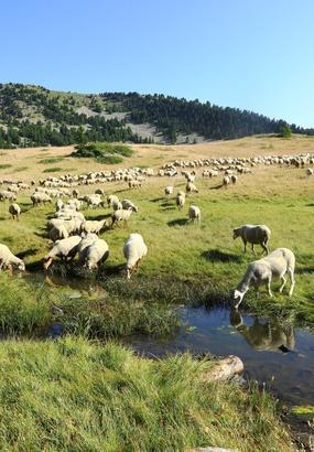 La Routo (GR 69), la montagne par ses drailles