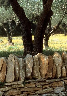Les paysages de garrigue autour du Pont du Gard