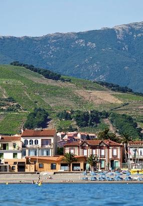 4 bonnes raisons de se balader dans les vignes de la Côte Vermeille