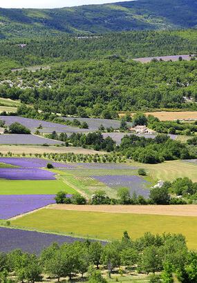 La route de la lavande en Provence