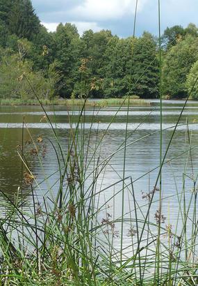 Les Vosges-Saônoises : balade entre étangs et montagnes