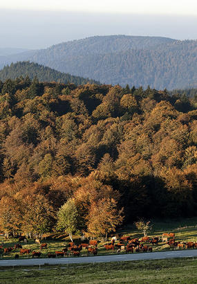 Territoire de Belfort : le kaléidoscope grandeur nature