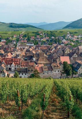 Sur la route des vins dAlsace
