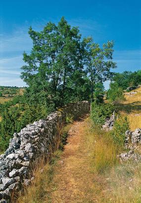 Compostelle : de Saint-Privat-dAllier à Saugues