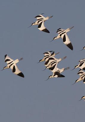 Parc du Marquenterre : au contact des oiseaux sauvages