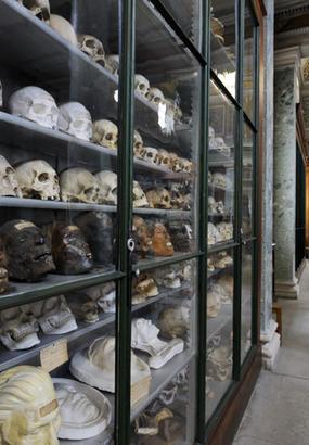 Vitrine du musée d'Anatomie