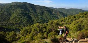 Randonnée en forêt dans le massif des Maures