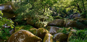 Les plus belles forêts de France où se promener