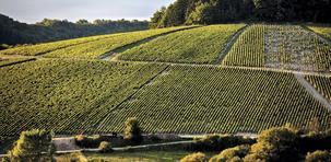 Chablis : porte d'or de la Bourgogne