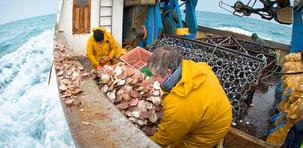 Une journée avec les pêcheurs de coquilles Saint-Jacques
