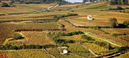 Le vignoble de Pommard, en Bourgogne