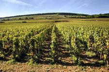 Domaine viticole de Beaune