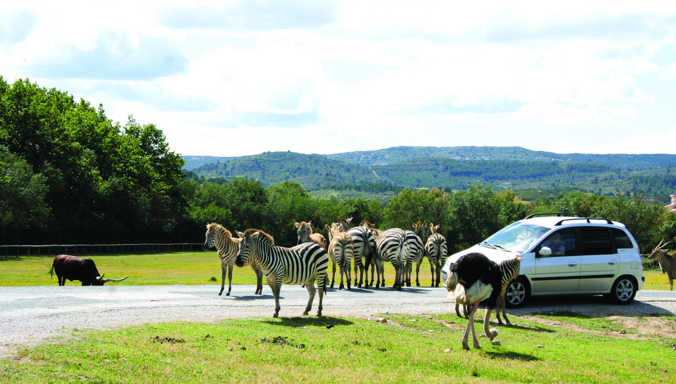 Zoo de france top 5 des plus beaux parcs animaliers for Zoo haute normandie
