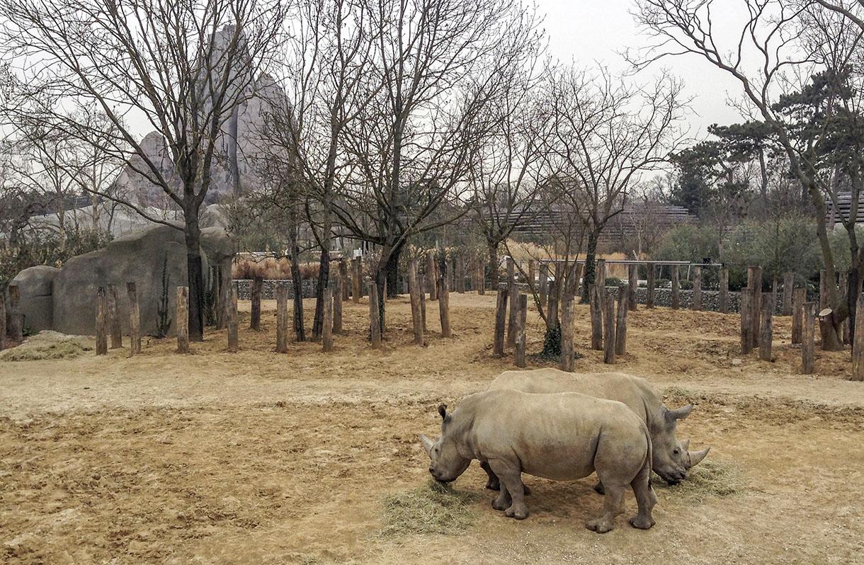 Zoo de paris devenir soigneur animalier actus for Zoo haute normandie
